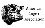 links_american_angus_ass